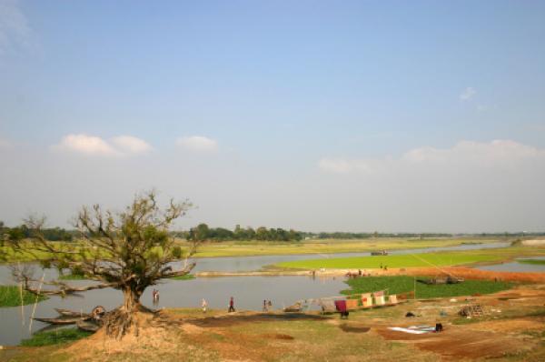 River and eroded tree, Bangladesh