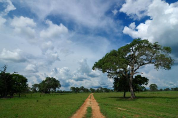 Road in Mato Grosso, Brazil