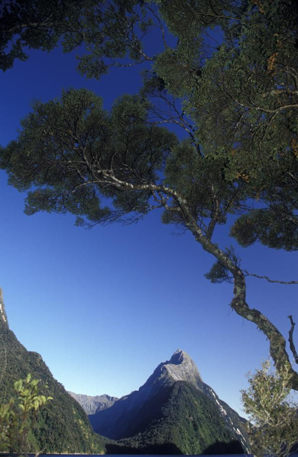 View of Mitre Peak, Milford Sound, Fiordland National Park, South Island, New Zealand.