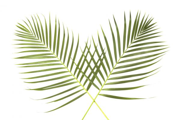 palm sunday church service receive palms many people who attend a palm