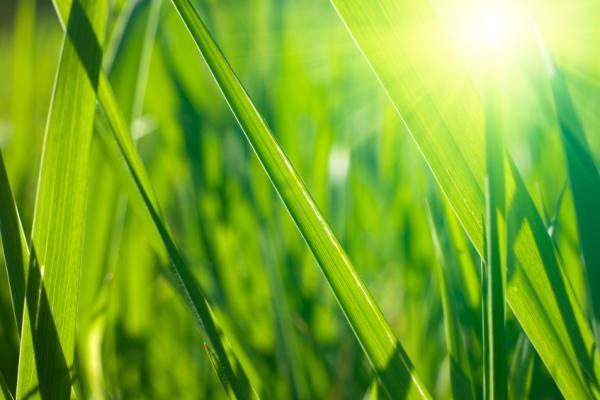 Closeup on fresh spring grass with warm sunlight