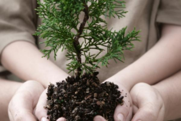 Small tree cupped in child's hands supported by mother's hands.