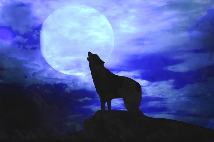 Fun Holiday Howl At The Moon Day And Night