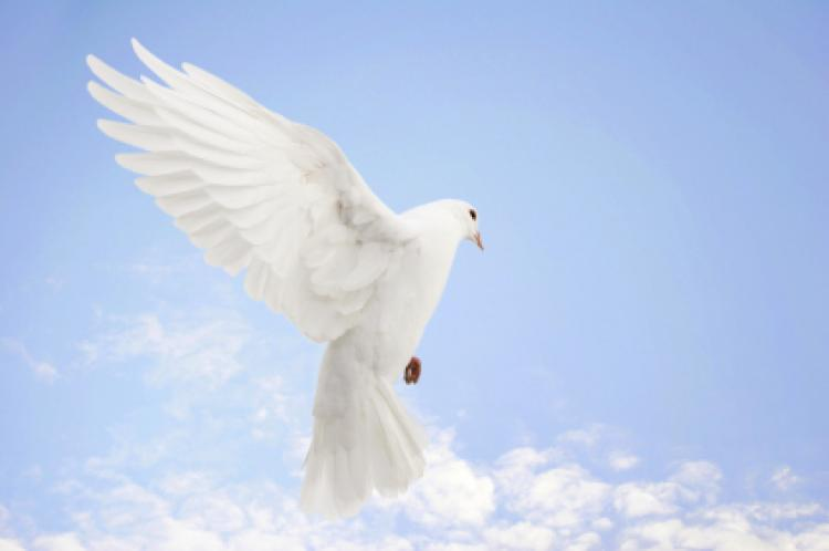 UN International Day of Peace