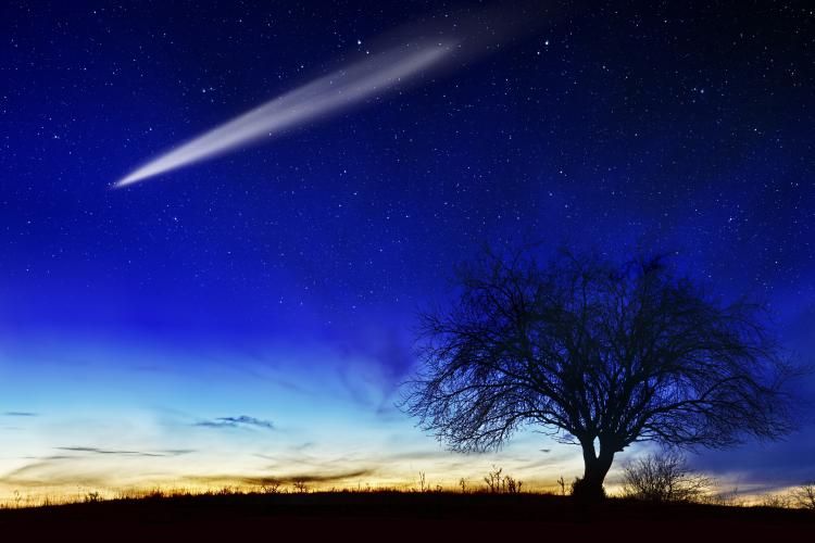 A shooting star goes across a cobalt blue star filled winter night with an apple tree silhouetted in the foreground.