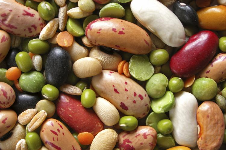 Close-up of colorful beans.