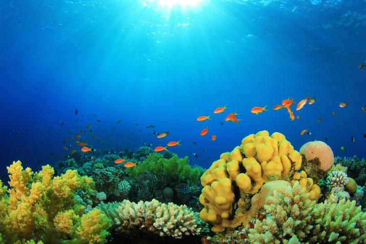Tropical Fish and Coral Reef in Sunlight.