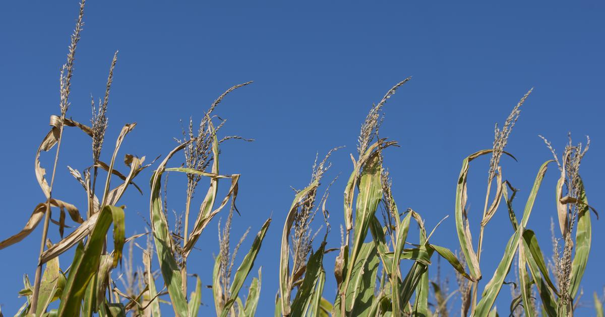 harvest moon or full corn moon in september