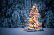 Et snødekket bartre midt i skogen dekorert med lys i mange farger.