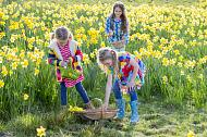 Three young girls on Easter hunt in field of daffodils.