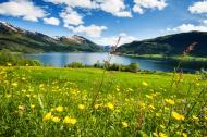 sommerblomster ved norsk fjord.