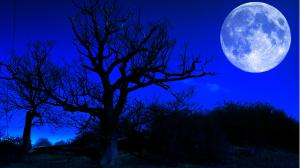 Illustrating a blue moon. Manipulated photo of silhouetted trees in front of a blue glowing full moon in a very blue sky.