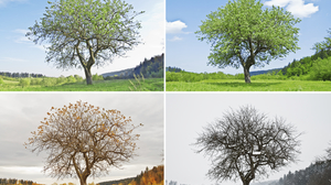 A tree changing through the four seasons.