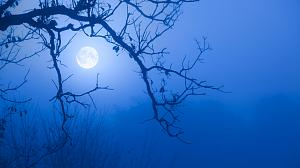 Full Moon peeking through branches. Blue and foggy background.