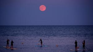Paddleboarders below the strawberry moon at Barceloneta beach, Barcelona, Spain.