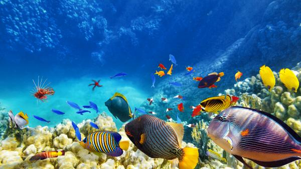 Beautiful biodiversity of a coral reef