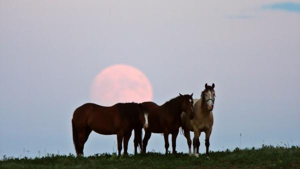 The Full Moon behind three horses.
