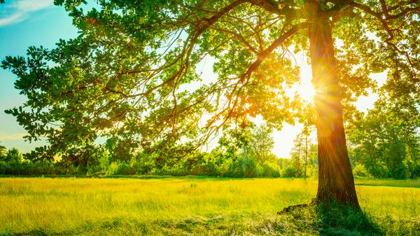 Summer Sun peeking from a tree.