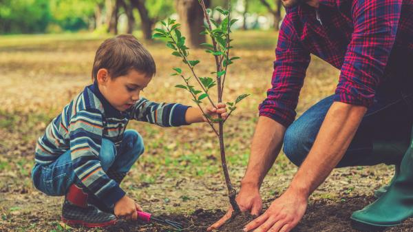 Little boy helping his father to plant a tree.