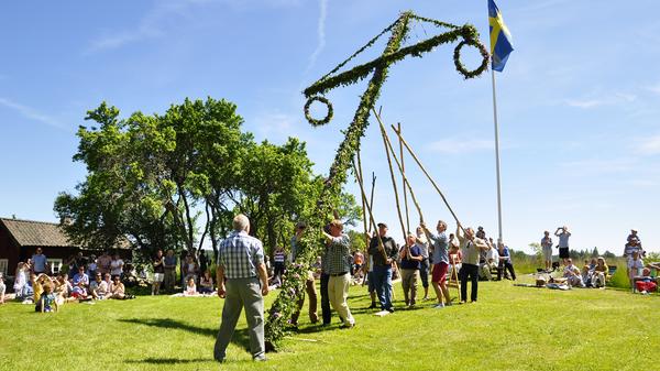 Men setting up the Maypole for Midsummer celebrations in Torstuna, Sweden.