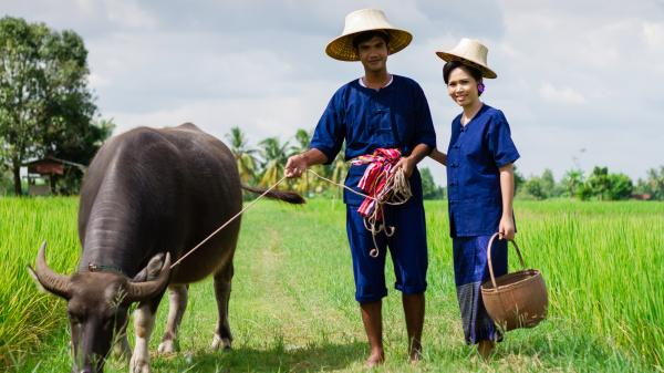 International Year of Family Farming