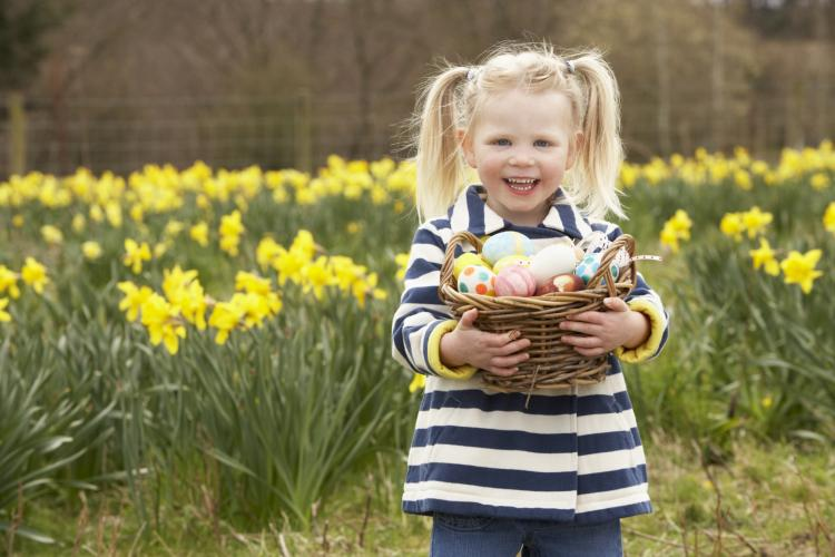 LIttle girl in a field of daffodils holding a basket of Easter eggs.