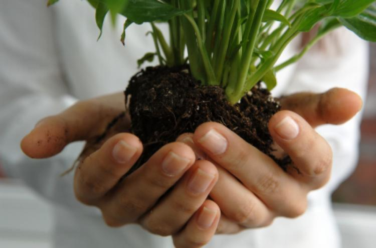Stretched out hands gently holding a plant in soil.