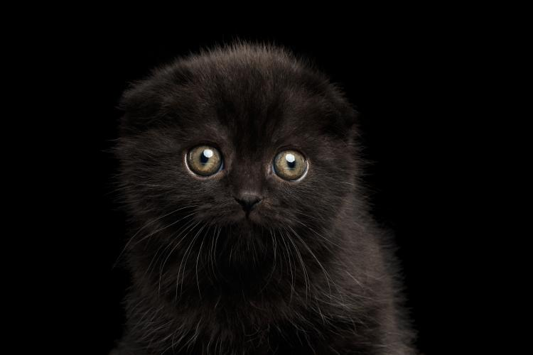 A black kitten looking sad.