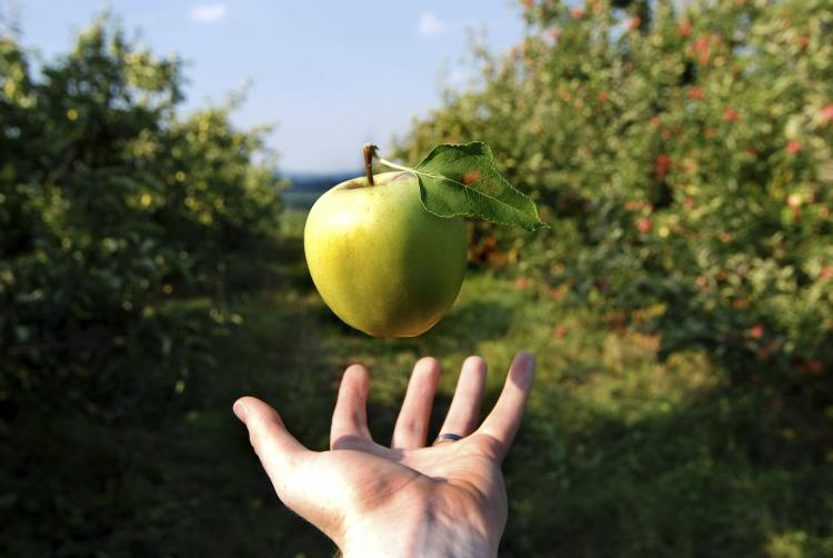 Apple floats with no gravity over a hand.