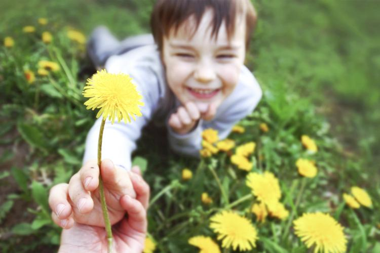 Boy giving a dandelion to his mother.