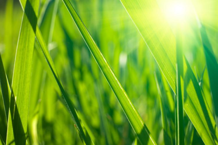 Closeup on fresh spring grass with warm sunlight