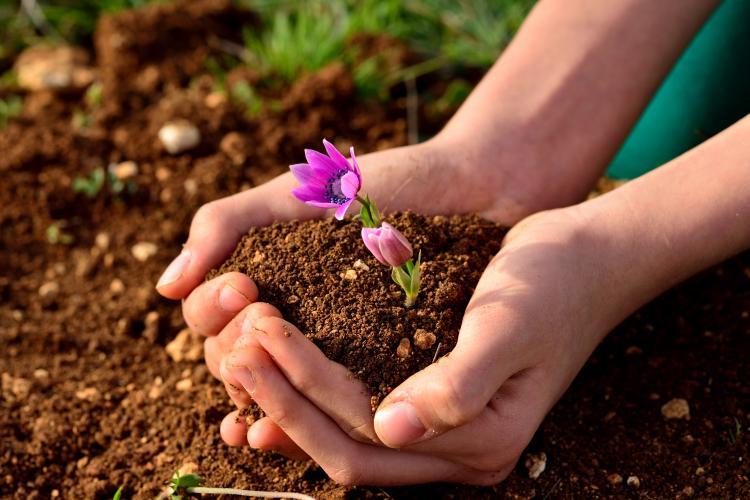 2015  U2013 Un Year Of Soils