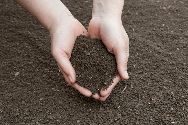 2015 was declared as the UN International Year of Soils.