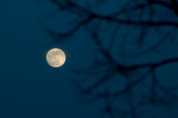Full Moon and branches against a dark sky.