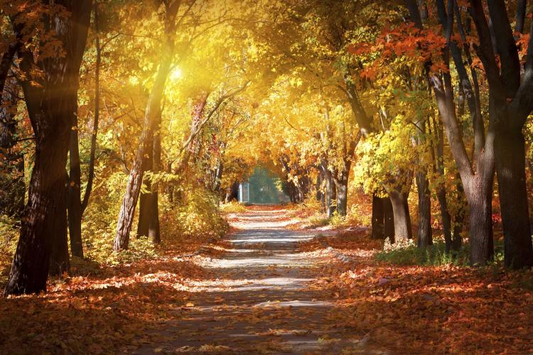 All Kinds of Fall Facts and Fun Awesome Autumn Holidays