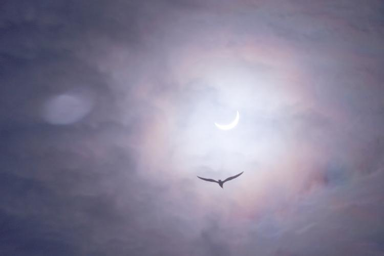 Partial solar eclipse with bird.