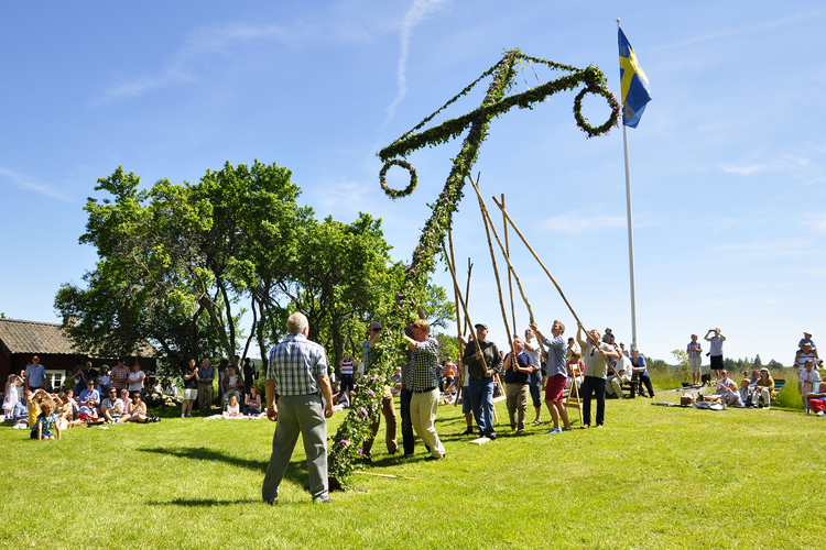 Men setting up the Maypole for Midsummer celebrations in Torstuna, Sweden.
