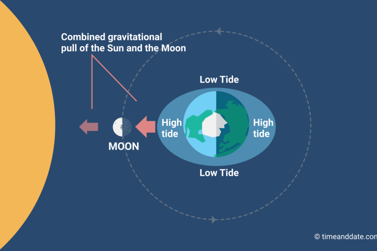 Illustration showing how the gravitational force of the Sun and Moon act together and create spring tides at New Moon and Full Moon.