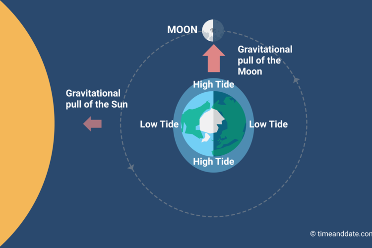 The tidal range is smallest at the 2 Quarter Moons.