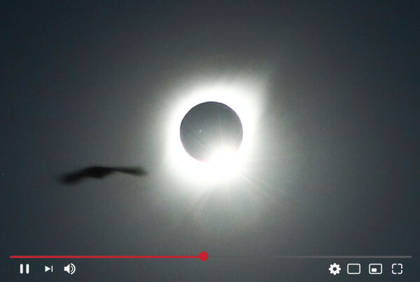 Screenshot of live streamed solar eclipse with bird passing in front.